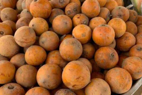 4 Hair Benefits of Agbalumo Fruit